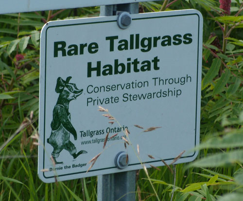 Rare-Tallgrass-Habitat sign