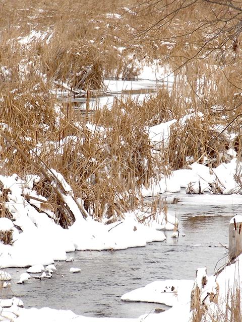 Alex's Creek, Rice Lake