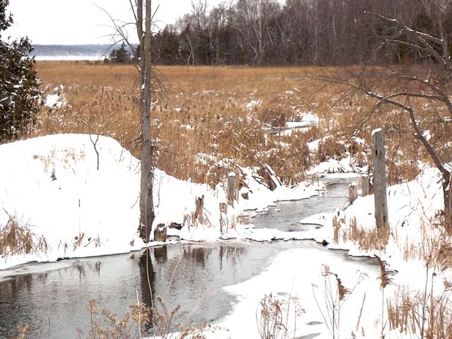 Alex-Creek-and-Rice-Lake
