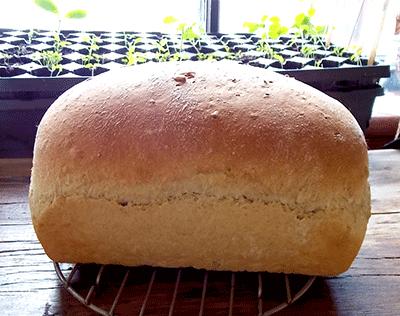 Oatmeal Kamut Bread