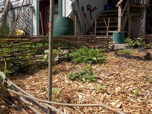 wattle herb garden fence
