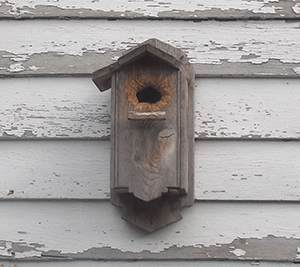Nuthatch nesting box
