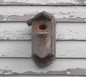 Nuthatch nesting box