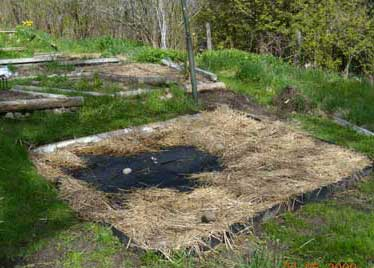 Planting a sally/willow garden