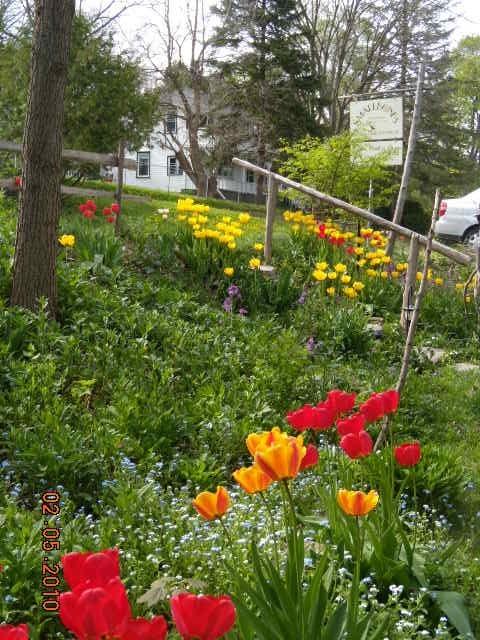 Smallbones spring garden